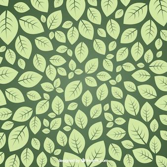 Les feuilles vertes de fond
