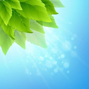 Feuilles vertes fraîches de printemps.