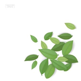 Feuilles vertes isolés sur fond blanc.