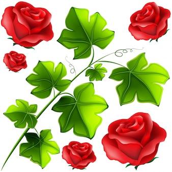 Feuilles vertes et roses rouges