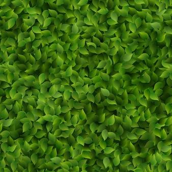 Feuilles vertes transparente motif printemps ou été fond frais.