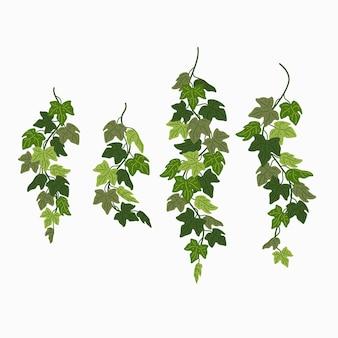 Feuilles vertes de vignes de lierre d'une plante grimpante