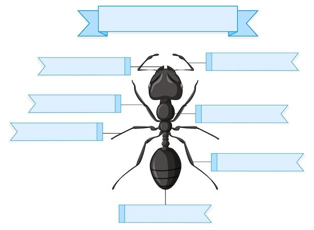 Fiche de travail anatomie externe d'une fourmi