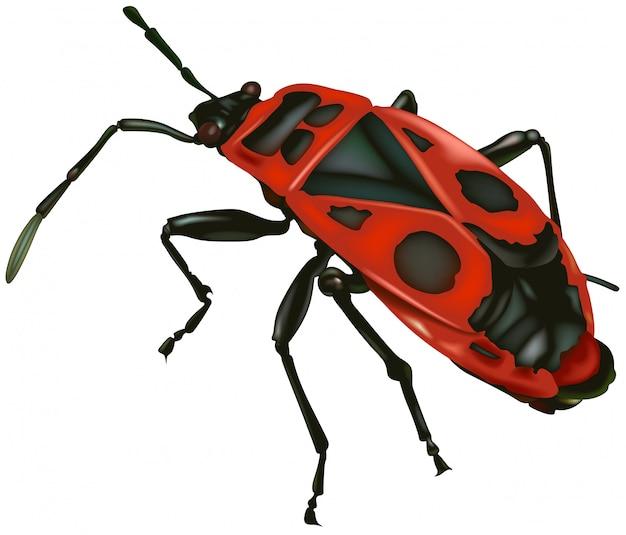 Firebug rouge
