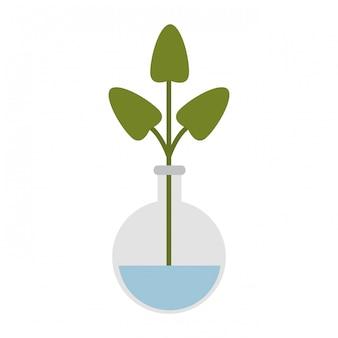 Flacon de chimie avec plante
