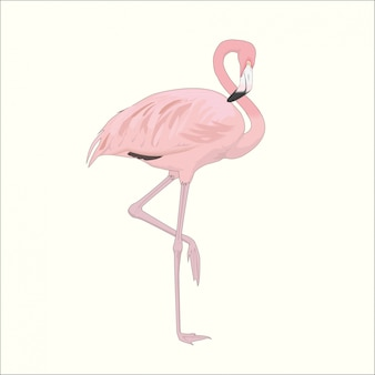 Flamant rose sur une jambe