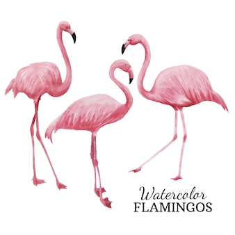 Flamants roses à l'aquarelle