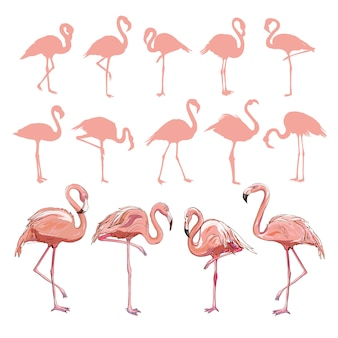 Flamingo, ensemble de flamants