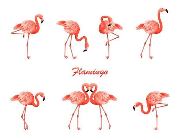 Flamingo situé dans différentes poses