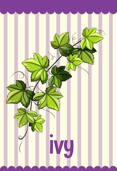Flashcard de vocabulaire avec le mot ivy