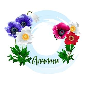Fleur d'anémone rouge, bleue et blanche