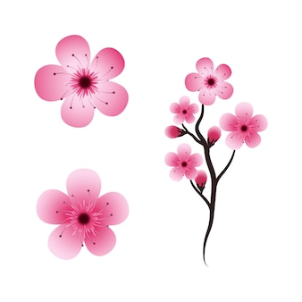 Fleur De Beauté Sakura Vecteur Premium