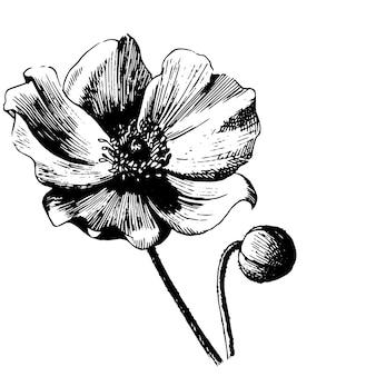 Fleur botanique florale. illustration isolée