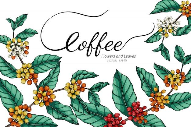 Fleur de café et illustration de dessin de feuilles avec dessin au trait sur les blancs.