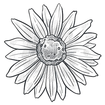 Fleur de camomille en fleur vecteur croquis monochrome