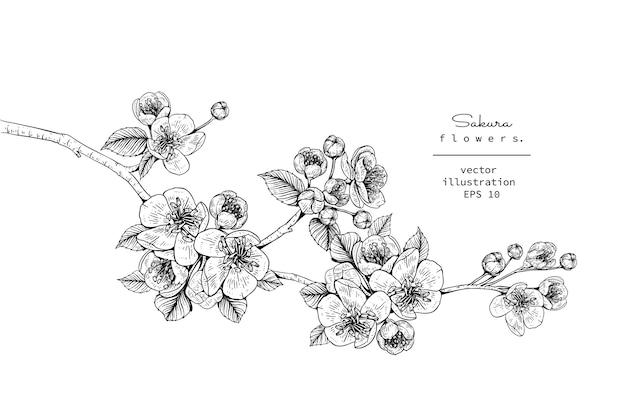 Fleur De Cerisier Sakura Fleur Dessins Télécharger Des
