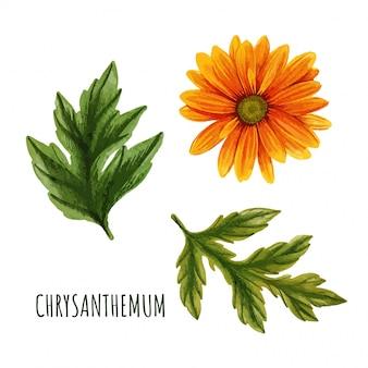 Fleur de chrysanthème orange avec des feuilles, théier