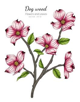 Fleur de cornouiller rose et illustration de dessin de feuilles avec dessin au trait sur fond blanc.