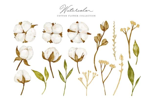 Fleur De Coton Aquarelle Collection Ellement Vecteur Premium