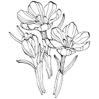 Fleur de crocus isolé sur blanc