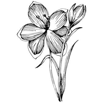 Fleur de crocus ou de safran.