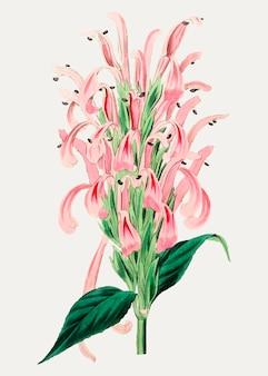 Fleur de flamant rose