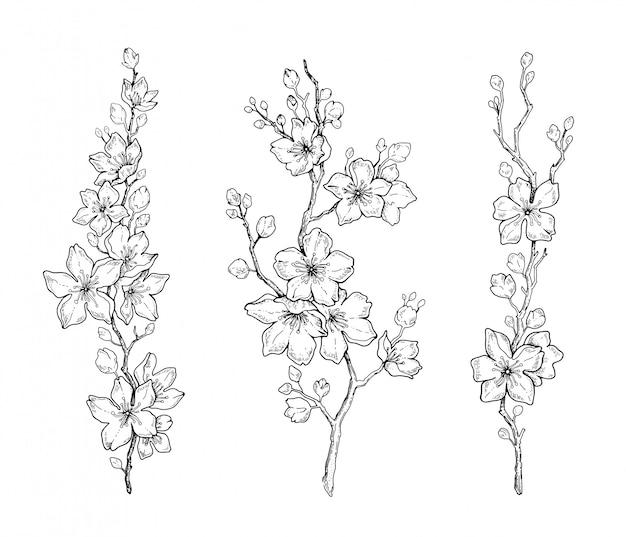 Fleur de fleur de cerisier de printemps, croquis de ligne noire botanique