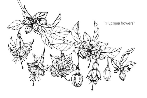 Fleur fuchsia