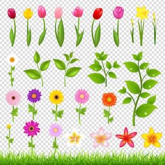 Fleur grand ensemble illustration isolé