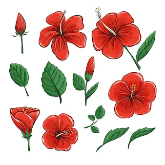 Fleur d'hibiscus rouge de fleurs tropicales et feuilles en dessin vectoriel réaliste.