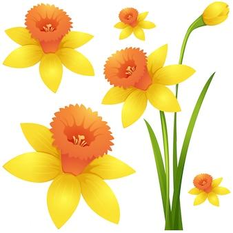Fleur jonquille en couleur jaune