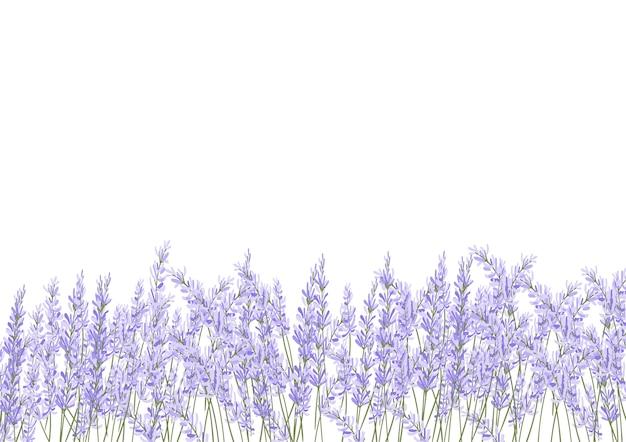 Fleur de lavande déposée