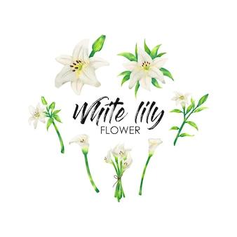 Fleur de lys blanc en vecteur d'inspiration aquarelle