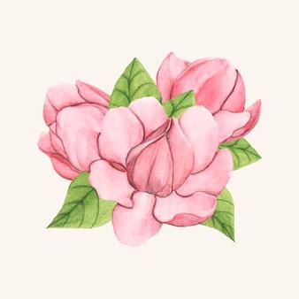 Fleur de magnolia soucoupe dessiné main isolé