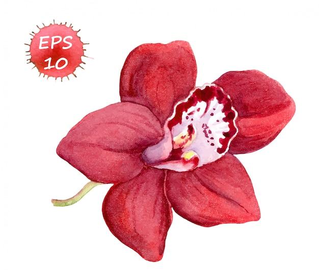 Fleur d'orchidée rouge.