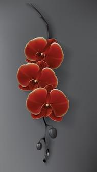 Fleur d'orchidée tropicale noire, rouge et or sur noir