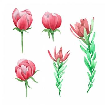 Fleur peinte à la main dans la collection d'aquarelles