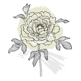 Fleur de pivoine. botanique floral.