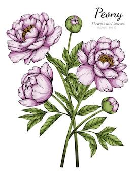 Fleur de pivoine rose et illustration de dessin de feuille