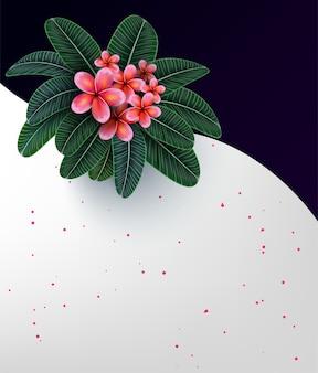 Fleur de plumaria rose avec espace de copie
