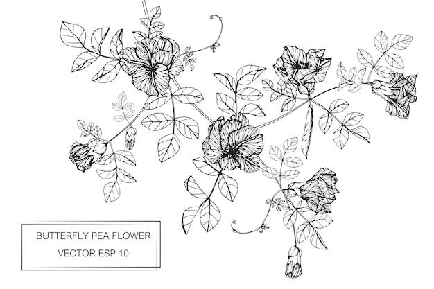 Fleur de pois papillon dessin illustration