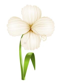 Fleur réaliste isolée