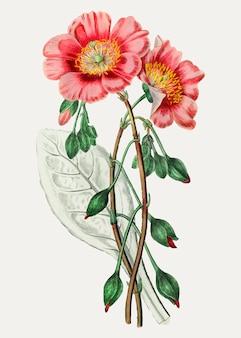 Fleur de redmaids
