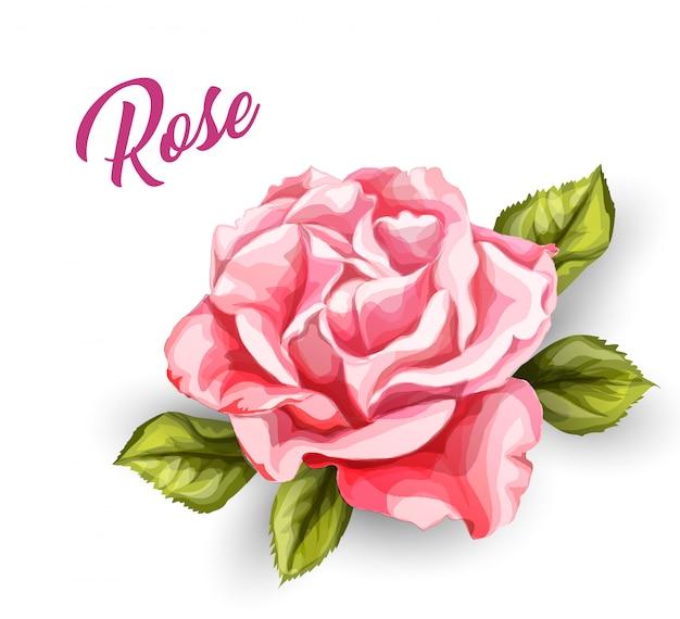 Fleur rose aquarelle dessinée à la main de vecteur pour carte de mariage vintage