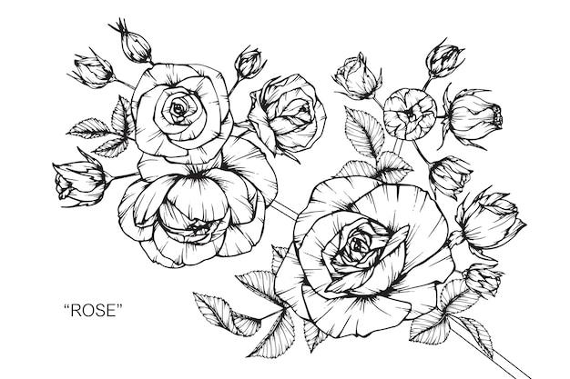 Fleur rose dessin illustration