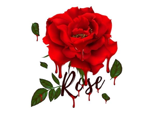 Fleur rose de plante en fleurs. rose de jardin isolée