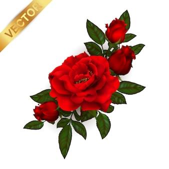 Fleur rose de plante en fleurs.