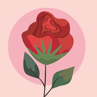 Fleur rose rouge de beauté