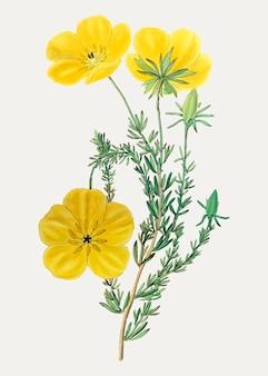 Fleur thalamiflorae