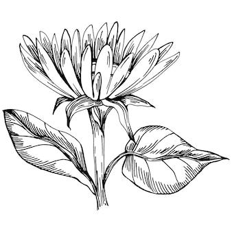 Fleur de tournesol. fleur botanique florale. élément d'illustration isolé. fleur sauvage de dessin de main de vecteur pour le fond, la texture, le modèle d'emballage, le cadre ou la frontière.